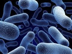 Clostridium Difficile: A Serious Bacterium (1/2)